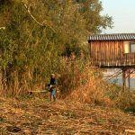 entretien des berges de Garonne